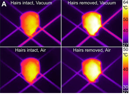 Thermal images of the ant head show that radiative cooling works both in vacuum and in air, and that the hairs are the source of this phenomenon