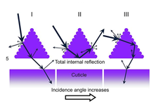 Total internal reflection happens for a range of incidence angles, and is one mechanism by which the ants' triangular hairs reflect visible light.